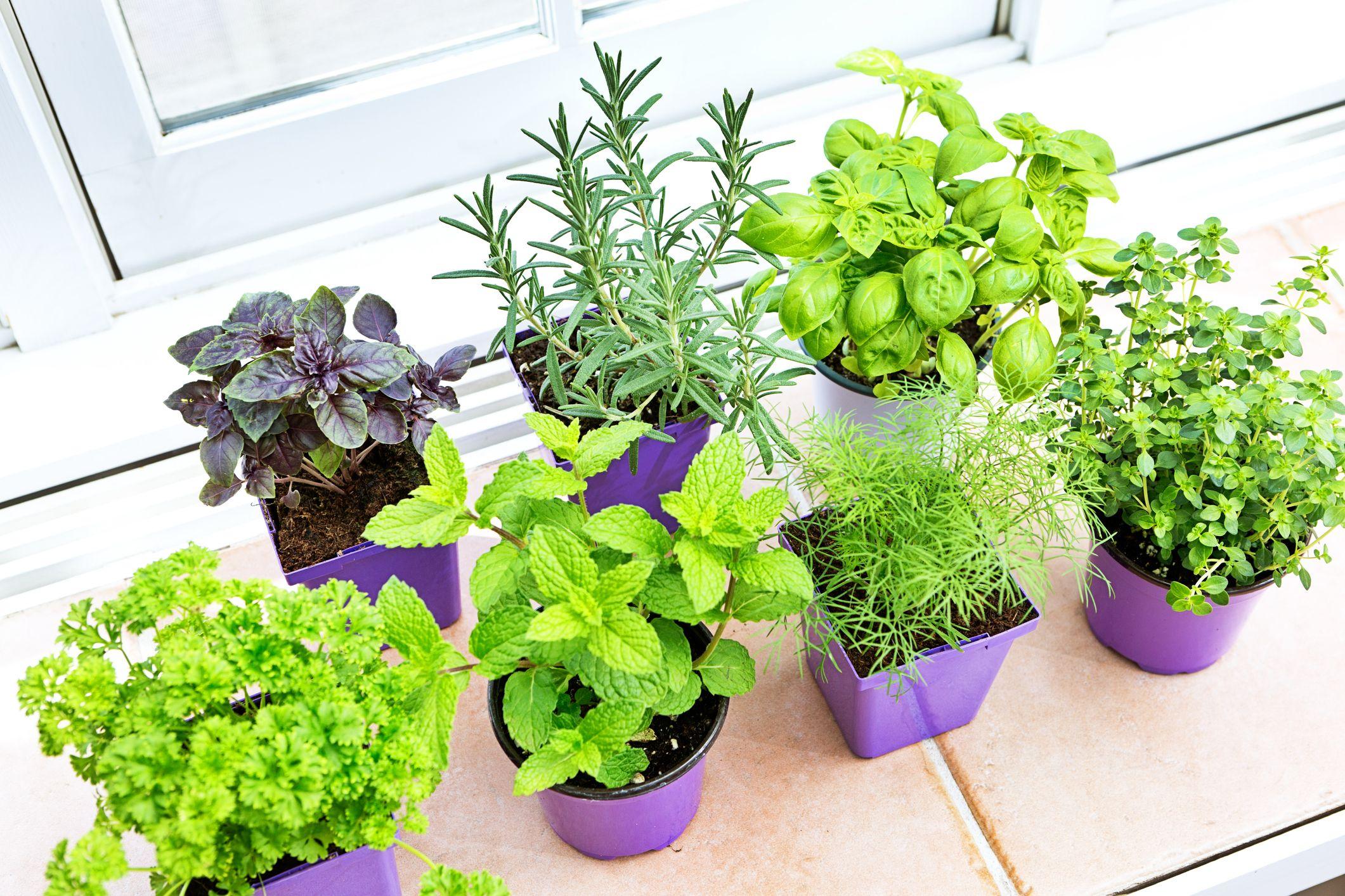 Growing an indoor herb garden this winter | Hy-Pro Fertilizers